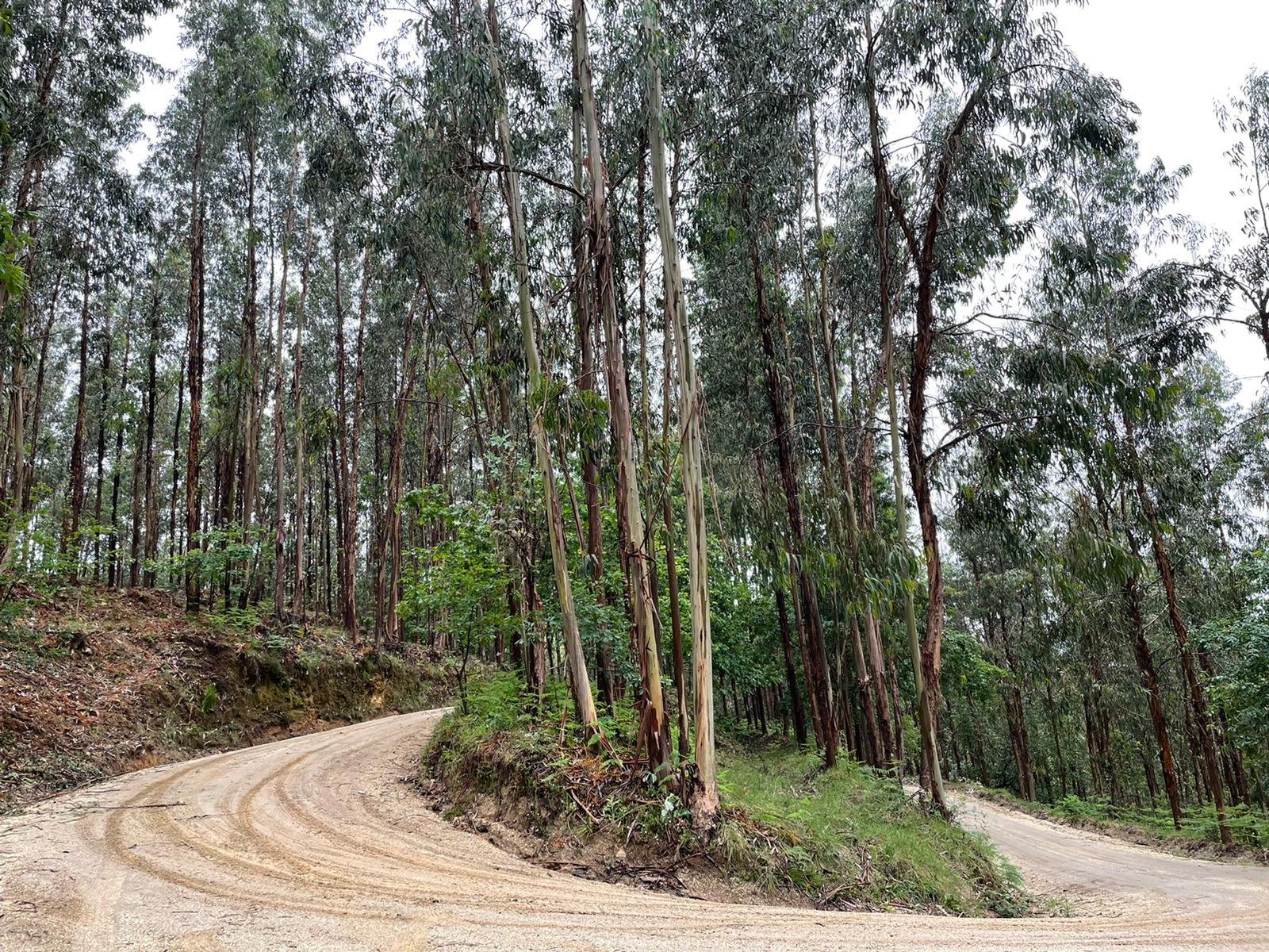 WRC: 54º Vodafone Rallye de Portugal [20-23 de Mayo] E1wohl8WQAElfF5?format=jpg&name=large
