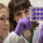 Image for the Tweet beginning: #ColoradoState researchers have discovered Zika