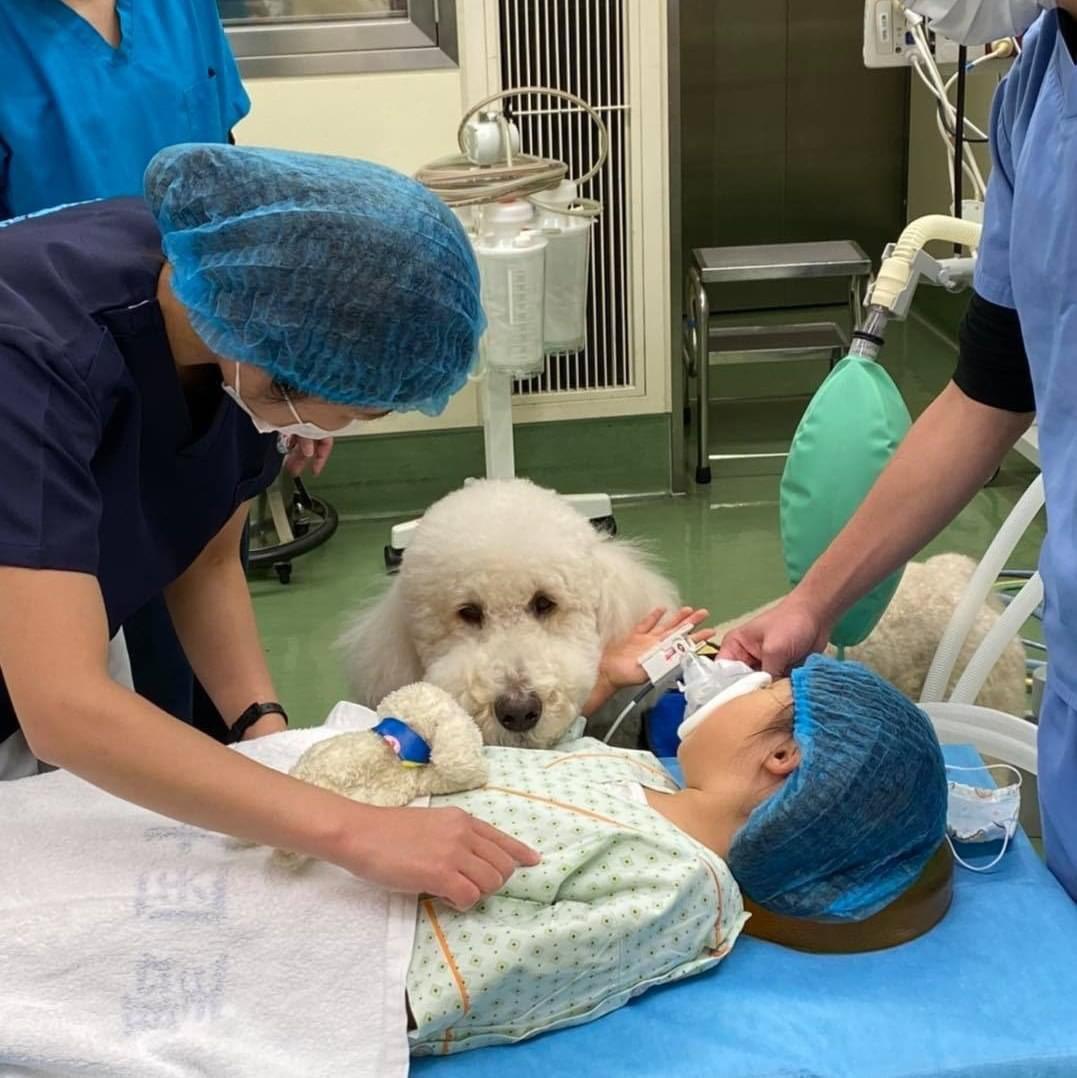 聖マリアンナ医大病院の勤務犬ことセラピードッグのモリス、めちゃめちゃお利口さんで涙が出そうになる わたしも癒されたい、、、、