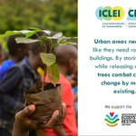 Image for the Tweet beginning: Cities need trees! For the