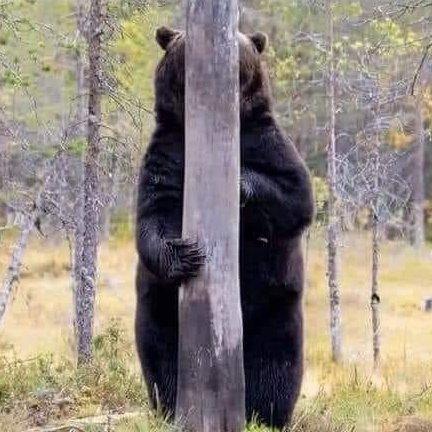 忍法隠れ身の術!?木に擬態化する動物の中で、熊だけ体が丸見えで面白すぎる!