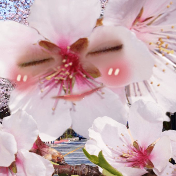 sakuyachan0215の画像