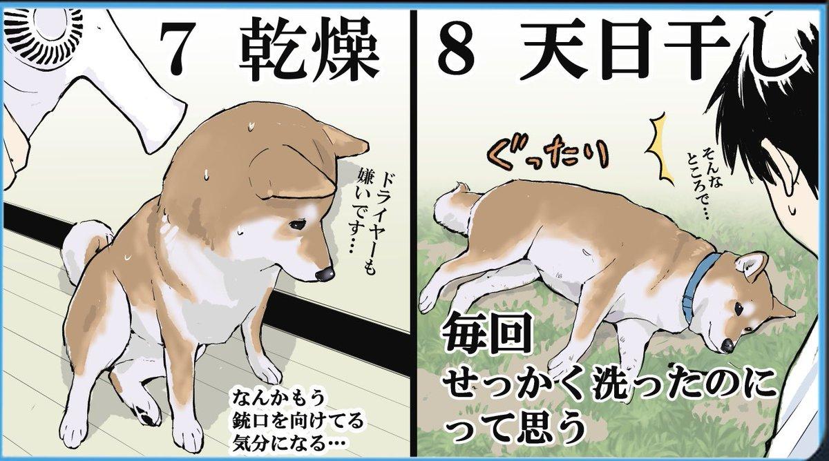 苦労してお風呂に入れたのに最後には・・・!飼い犬のお風呂の流れを描いたイラストが話題に!