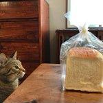 食パンを自慢しようとしただけなのに!ちょっと目を離した隙に猫たちによって消された食パン!