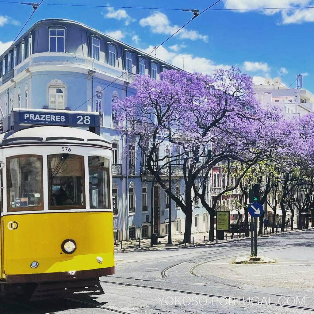 test ツイッターメディア - レトロなリスボンの路面電車とジャカランダ。 #リスボン #ジャカランダ #ポルトガル https://t.co/ZK5r5GrBfZ
