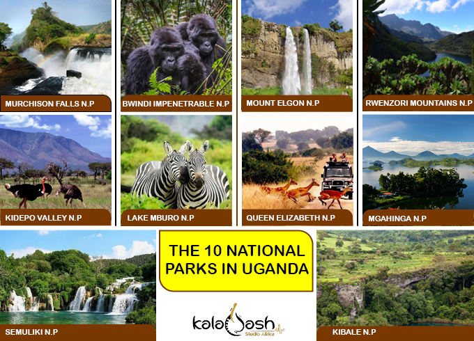 Uganda has 10 beautiful national parks across different regions, each with unique features to see.  How many have you visited?  What and where was your best experience?  #ExperienceUganda