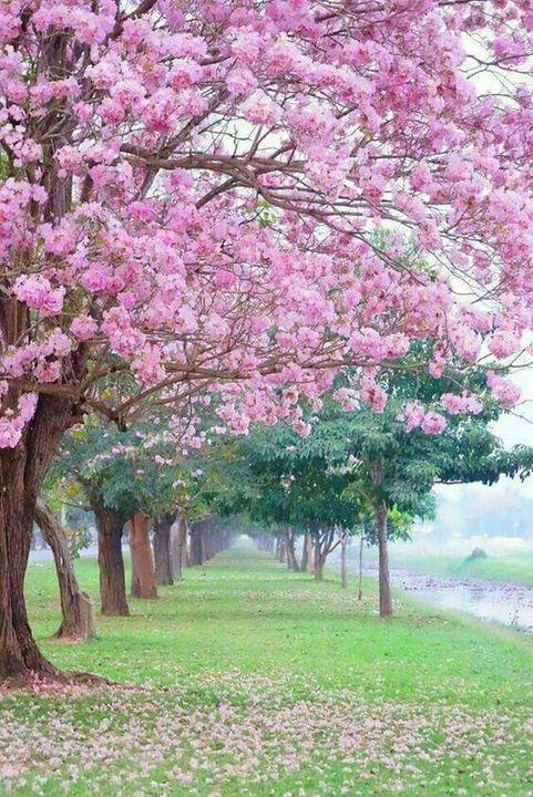 blossiesbooks photo