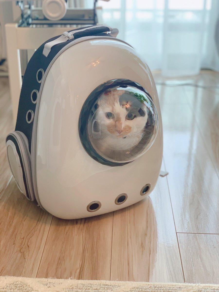 猫を連れた防災避難時にはリュックが最適!近未来でアマングアス感あふれる形が珍しい!