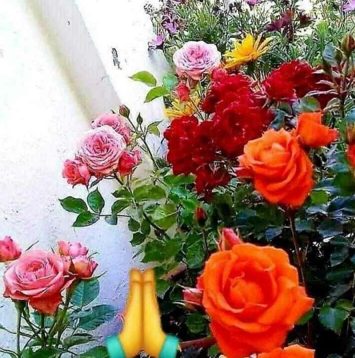 Happy Birthday Sir  May Mahadev continues to smile on u Sir