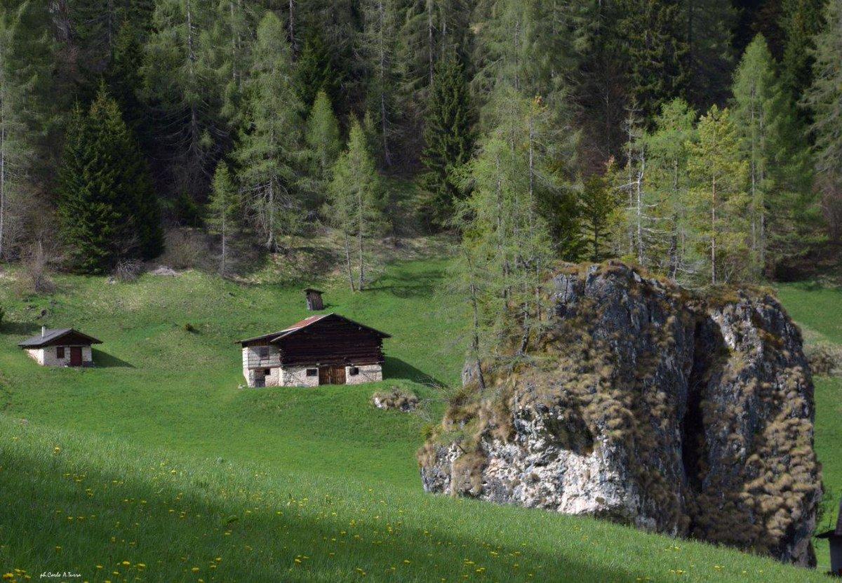 #prati in località Fosne, in alta Val Canali #par...