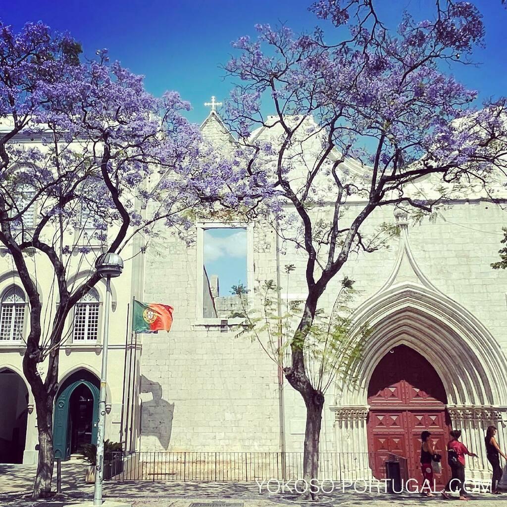 test ツイッターメディア - カルモ広場のジャカランダ。 #リスボン #ポルトガル #ジャカランダ https://t.co/ZcHWNvB7bd