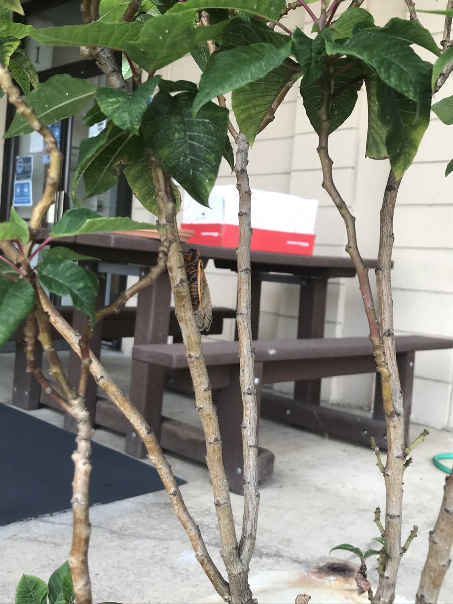 RT @kerm_towler : 你能在一品红植物中找到蝉吗?APS设施'> @APS设施 ? https://t.co/vMZY6CDqCF
