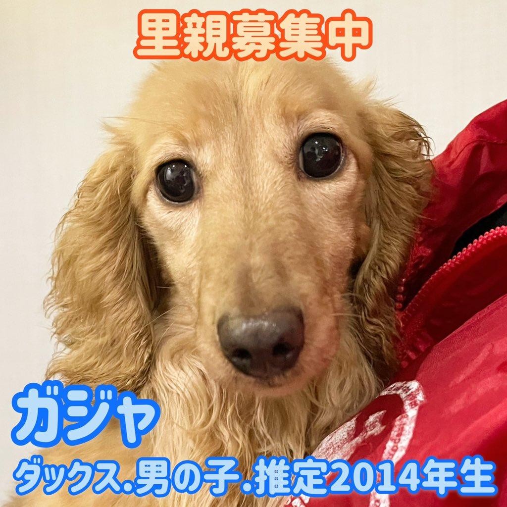 鶴橋 保護 犬 店 カフェ