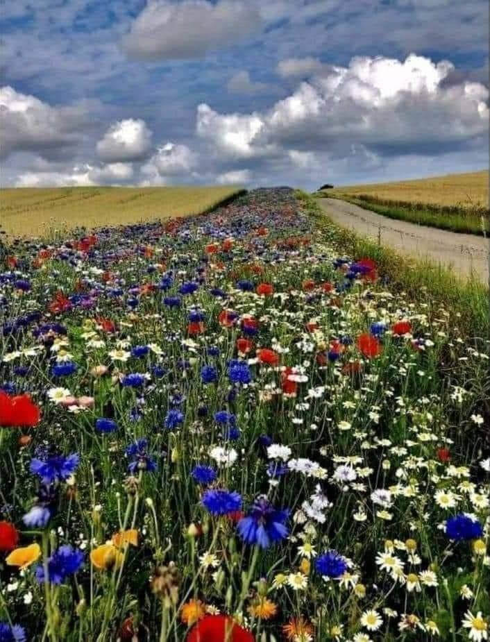 In Denmark, farmers are required by law to grow field flowers for bees on 5 % of their land.... 💐🐝