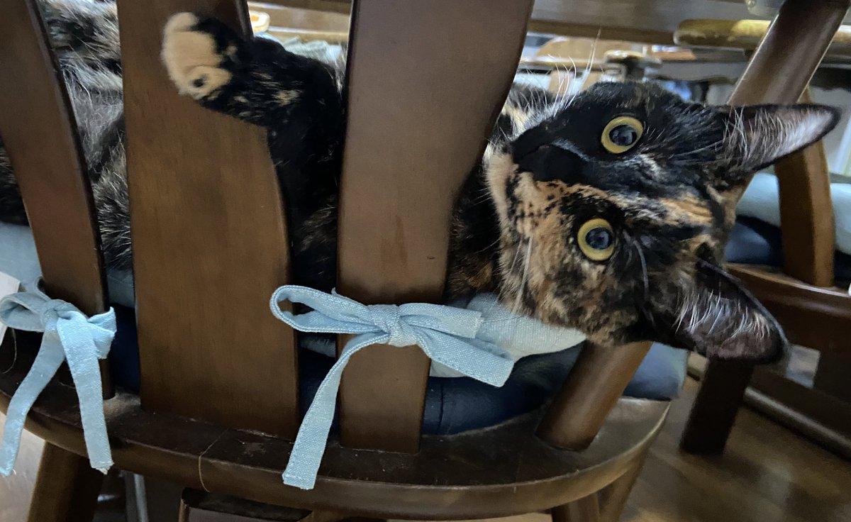 そうとしか見えなくなる?!猛スピードで疾走しているように見える猫の写真が話題に!