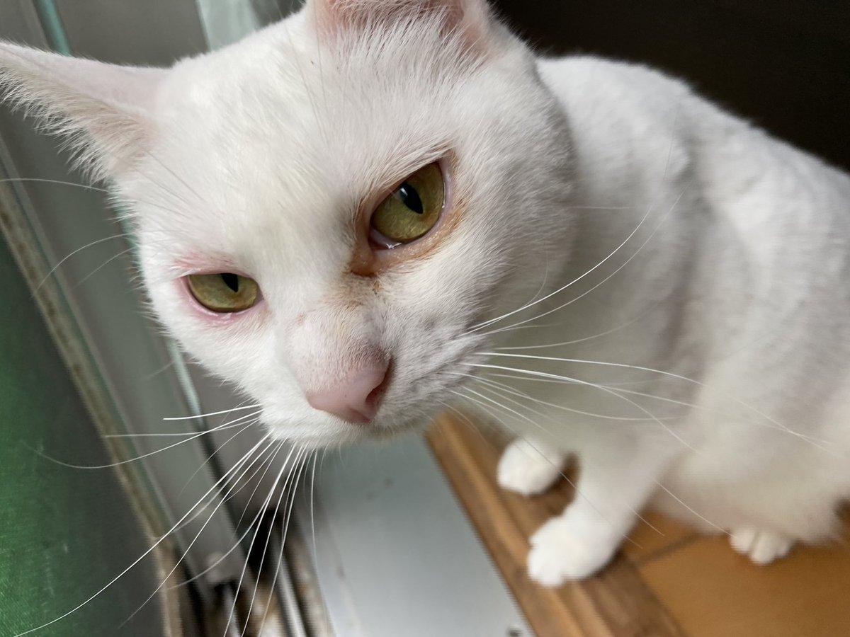ネコ飼いさんは要注意!市販の蚊がいなくなるスプレーを使ったらアレルギー!?