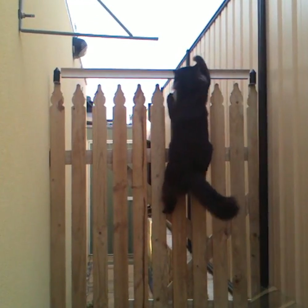 なるほどね!猫が絶対に越えられない柵。どのような仕掛けかというと・・・!