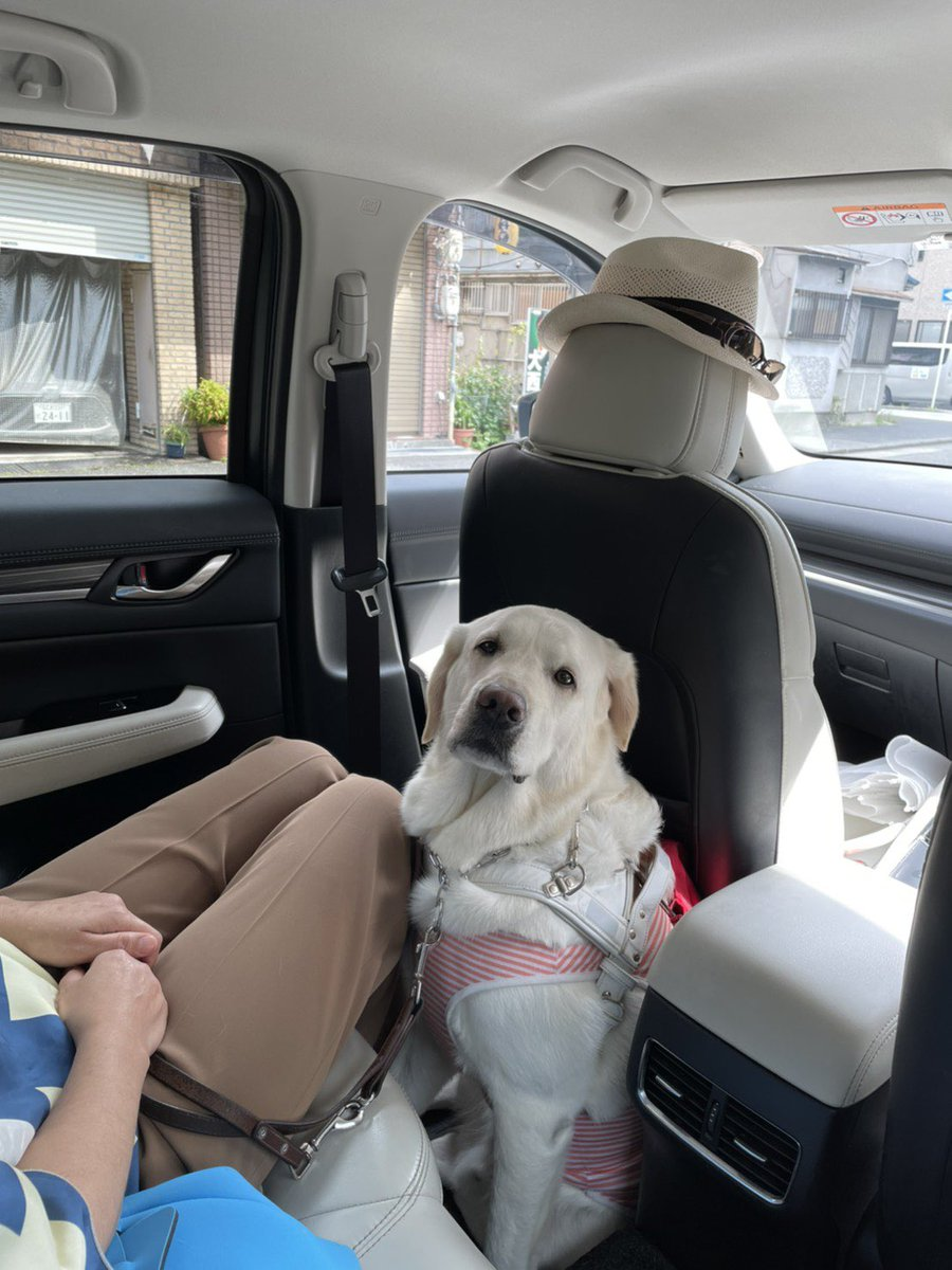 利巧すぎる!盲導犬は盲導犬使用者の足元に乗車をする!