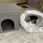 ニトリの「座れる室内用ペットハウス」を購入したところ、愛猫大満足!?