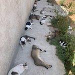 散歩から帰宅し日陰で座っていたら?隙間に猫が埋まっていった!