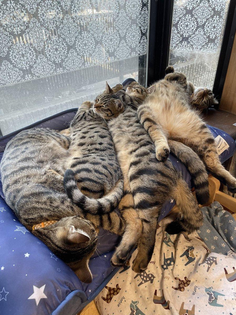暑くなってきたので冷感マットを購入したら?猫によって逆に暑くなる!