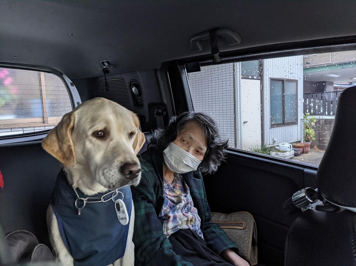 【ラストが涙で滲んで見えない】盲導犬になれなかった犬の話が心を震わせる