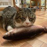 人間だったら嫌だけど?猫なら最高の生臭い枕!