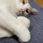 BOYMEN_hondaのサムネイル画像