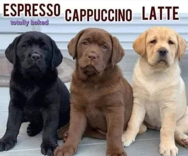 Good Morning and Happy Tuesday! 🌞 Espresso, Cappuccino, or Latte? ☕🐶 We prefer Lattes, but anything will do today! Anyone else not feel refreshed after the long weekend? Let's get this day started! We've got Cookies to deliver today! 😍  #totallybaked #cookiedelivery https://t.co/gsmtOUwbR6