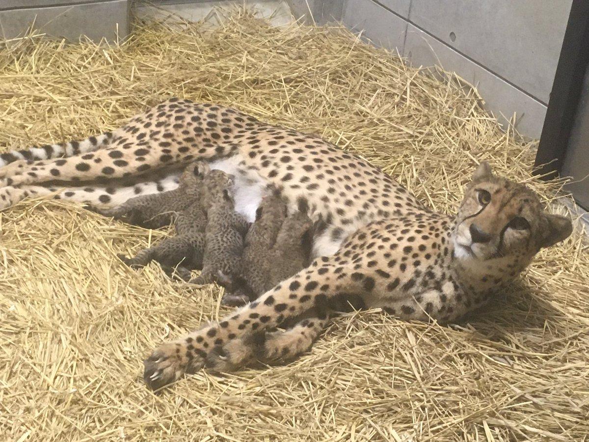 千葉市動物公園【公式】さんの投稿画像