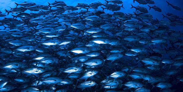Blue Financing for Community-led Marine Conservation in Fiji https://t.co/HjXRc0j0Nn https://t.co/kkhUNjwxAm