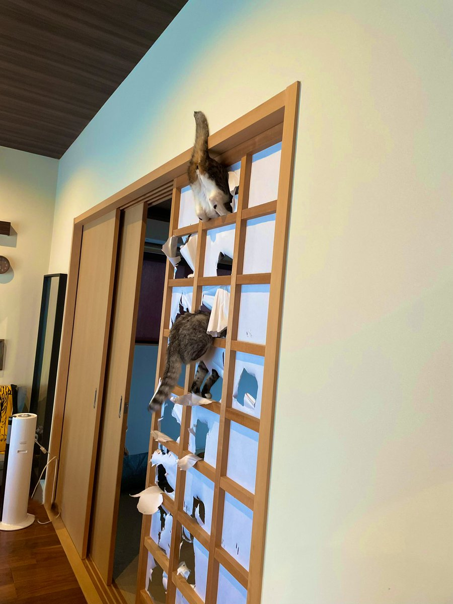 ココニャ@猫写真集、発売中!さんの投稿画像