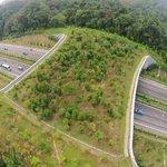 Holanda puso 600 puentes así para ayudar a los animales  a cruzar #infraestructuraverde #biodiversidad
