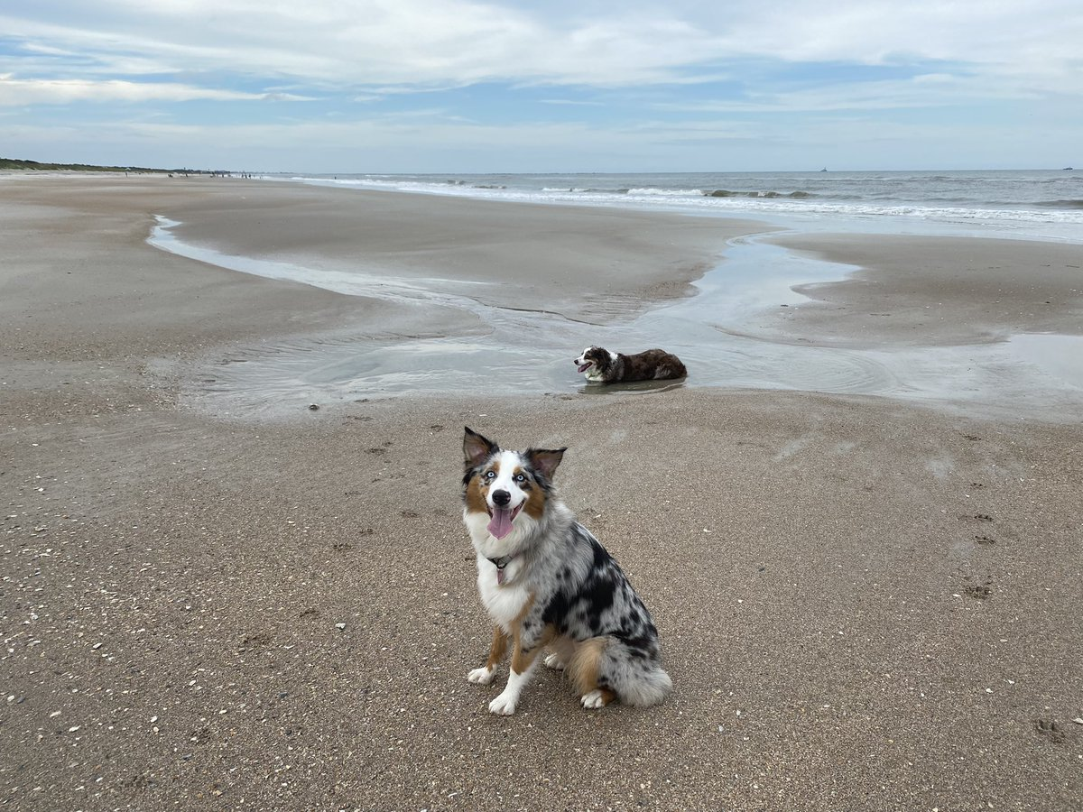 And just like that . . . home. #beachlife #MondayVibes #aussie @aussiesdointhgs https://t.co/K61l23213Z