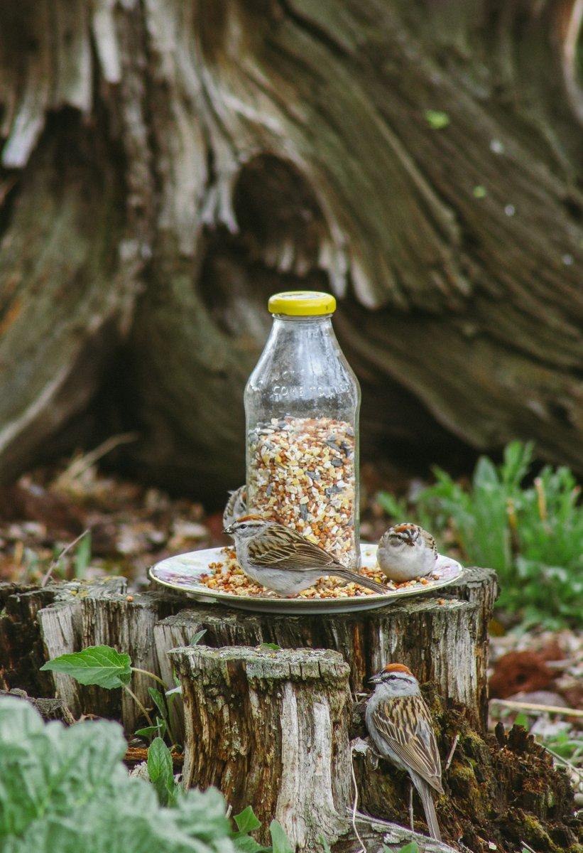 guayaki yerba mate pierdere în greutate