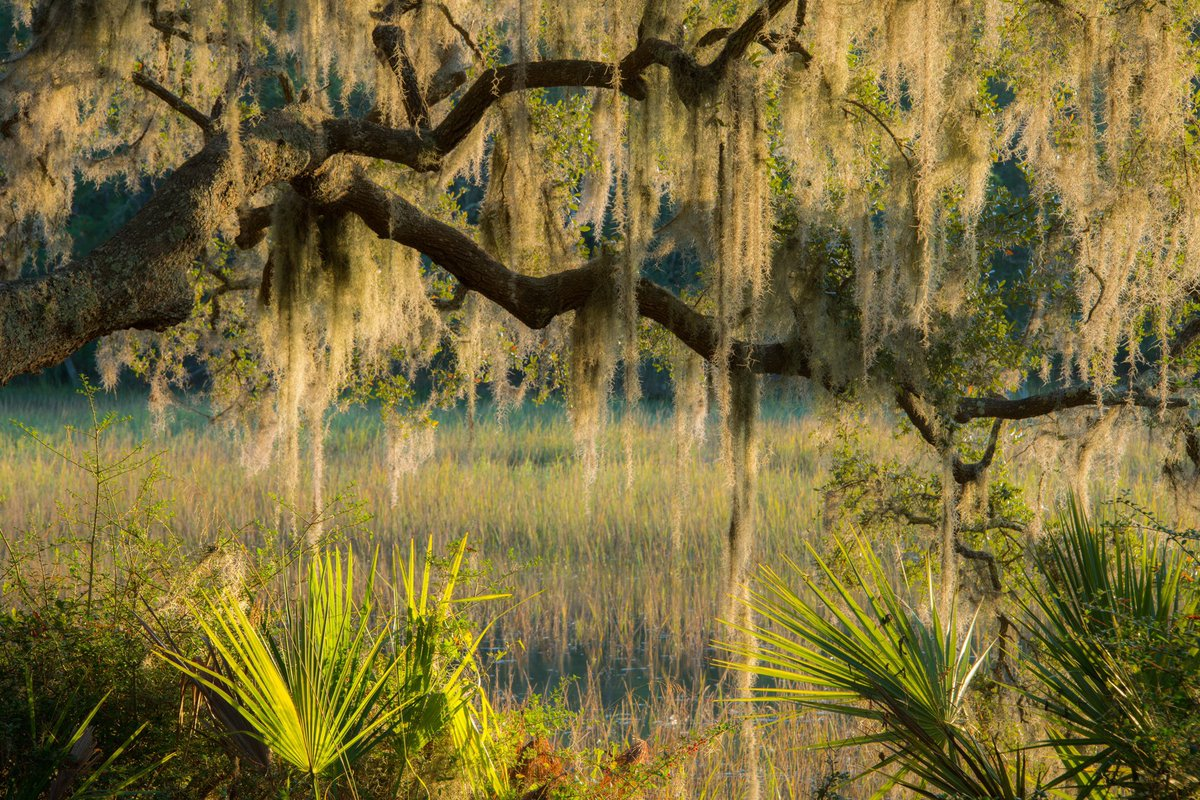 Maybe we're biased, but we think the South's hard to beat for stunning imagery and #NaturePhotographyDay is a great chance to share some of it.  Feast your eyes on some of our favorite regional scenes reminding us why we do what we do where we do. https://t.co/HSk3tpSwWt