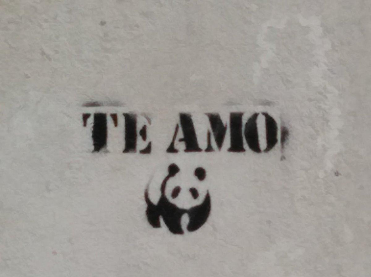 Por lo menos nos ha dado a Borja Iglesias alias el panda y aquí al parecer es como un dios https://t.co/Ln0lpB3749 https://t.co/sKiDLwRqaN