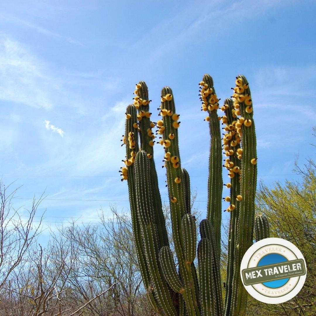 Wonders of nature   #MEXTRAVELERbcs #discoverbcs #loscabos #traveling #visitBajaSur https://t.co/XgHdTHeU3T