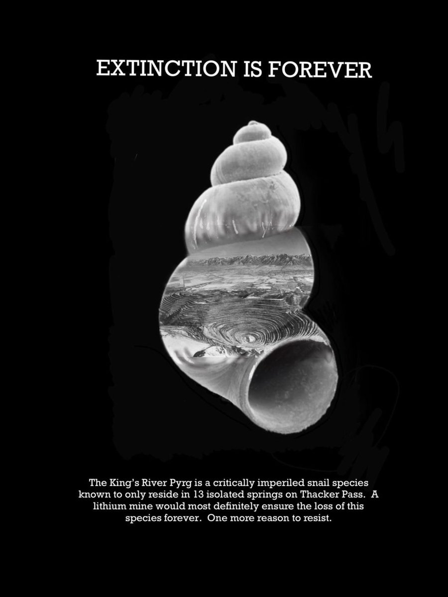 """""""The King's River Pyrg is a critically imperiled snail species known to only reside in 13 isolated springs on Thacker Pass. A lithium mine would most definitely ensure the loss of this species forever.""""One more reason to resist. http://www.protectthackerpass.org/kings-river-pyrg/ #ProtectThackerPass"""