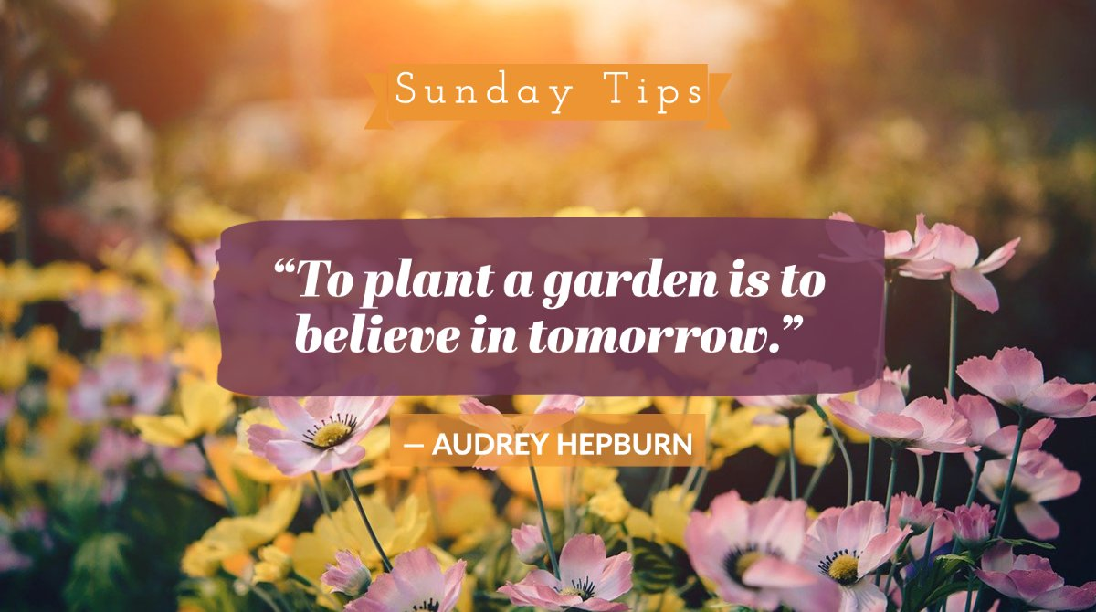 The effort you put into today will pay off tomorrow. 🌱  #ChooseOrlandoHealth #SundayTips https://t.co/AjPMLXSVy5
