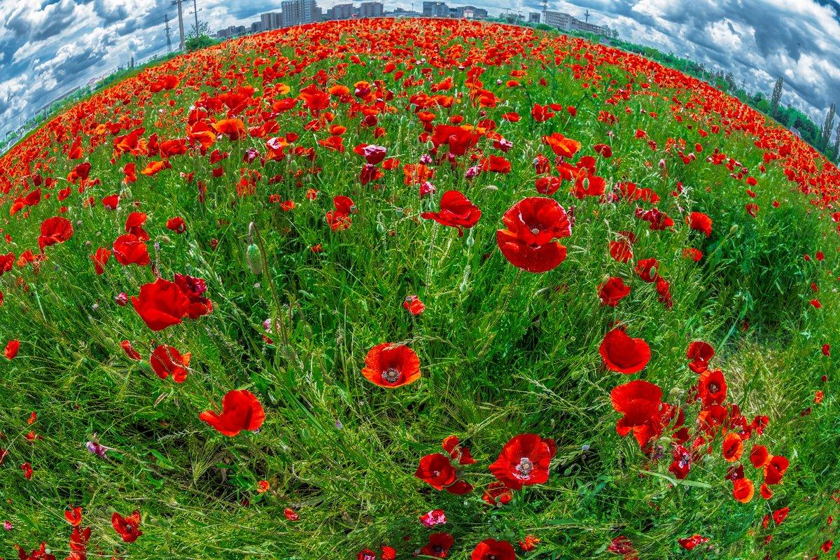 RT @liliana_dorina: Timișoara, Romania ❤ Playing With The Poppy Field 😉 Happy Sunday To All !! 📸#CanonEOSRP https://t.co/q8wECBjOE4