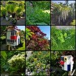 Zoveel moois in de tuin. 💚 En de vogels voederen we in 'Stijl'. #whosafraidofredyellowandblue ❤💛💙 #eigentuin #maaimeiniet #groen #genieten #destijl #multiholk