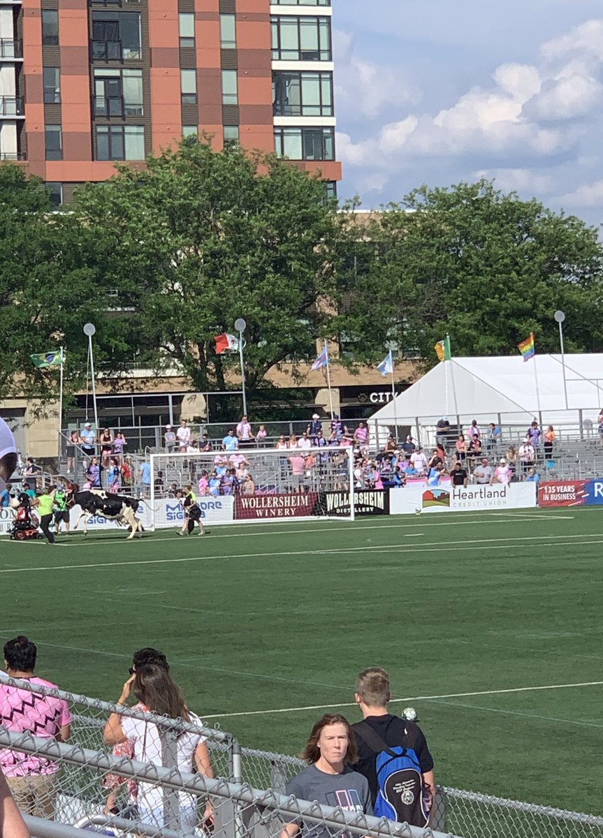 Representation matters.   Thanks, @ForwardMSNFC. And 😘 to Lionela.   <chews cud with satisfaction>