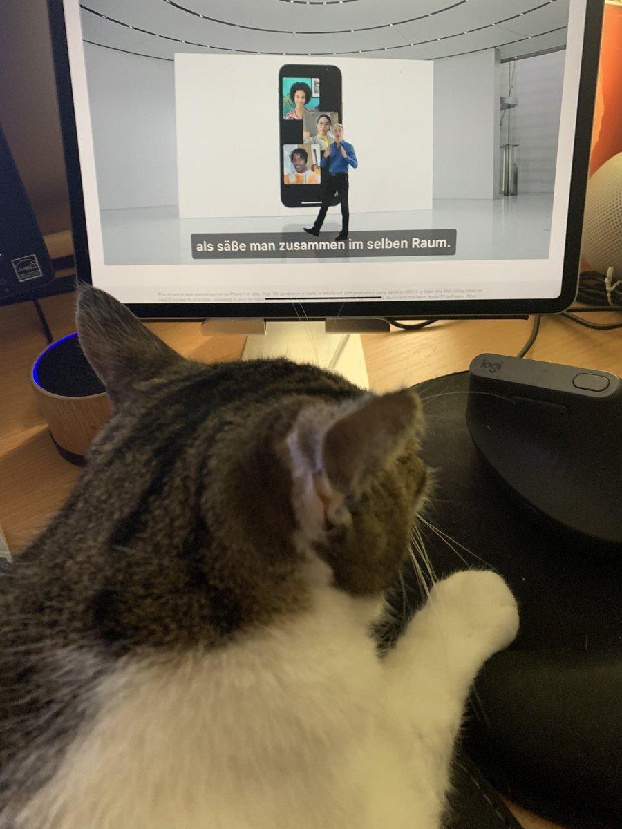 Die #Kimba von den @kimba_Galaxis schaut die #WWDC21 https://t.co/cfbotLAoyv
