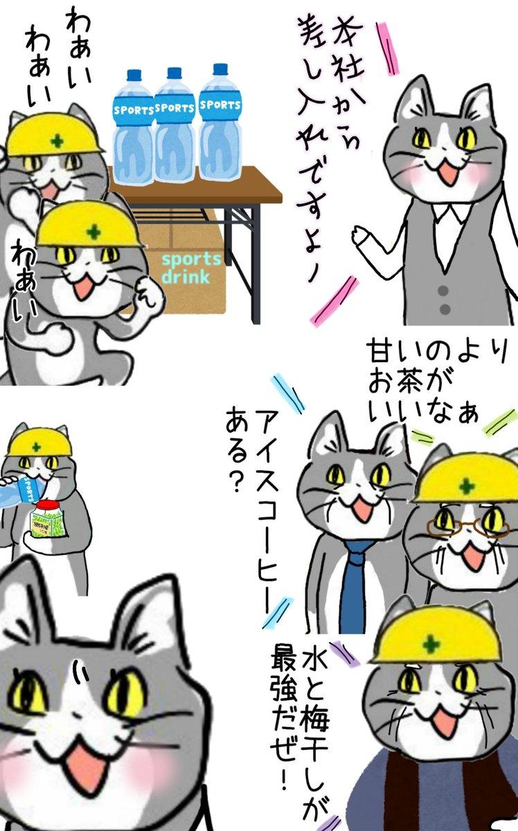 飲み物の流儀、猫それぞれ #現場猫