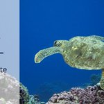 Image for the Tweet beginning: Today on #WorldOceanDay we've published