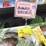 普通そうじゃない?死ぬまで生きていた魚を販売する店!