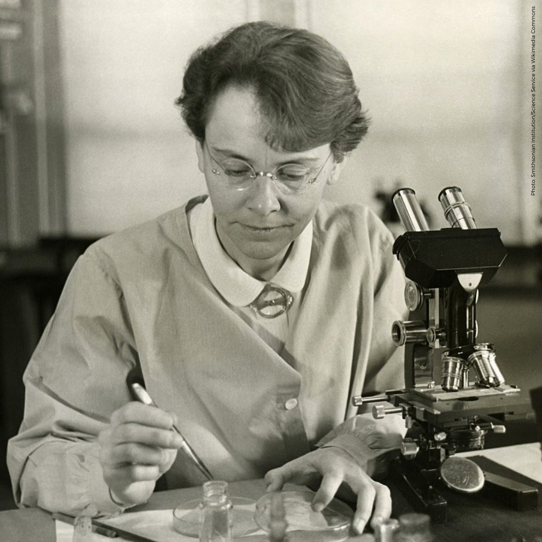 Barbara McClintock, born #OnThisDay in 1902, was an American scientist.  She won the #NobelPrize in Physiology or Medicine, awarded in 1983 for the discovery of genetic transposition.  Her legacy continues to inspire future #WomenInScience and us all. #HERstory https://t.co/IX0NAHTgn6