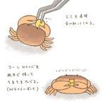 見てるだけで癒される!大事そうに両手でコーンを持って食べるサワガニが可愛すぎる!