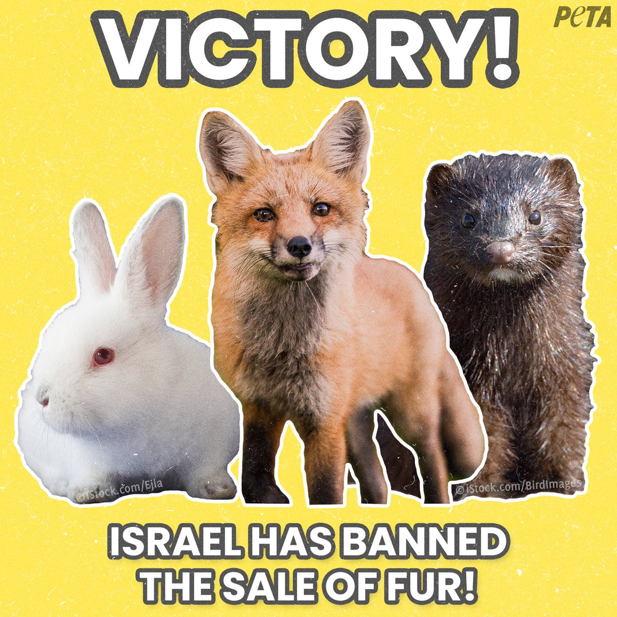 IT'S OFFICIAL:Israelhas become the first country in the world to ban the sale of fur!  This historic victory will protect countless foxes, minks, rabbits, and other animals from being violently killed for their skin. https://t.co/S9T5I5jfIP https://t.co/K6HBWq4NSC